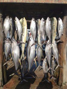 tuna fishing in the gulf