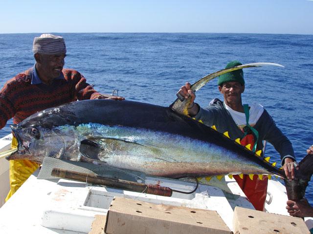 Fishing for yellowfin tuna out of venice louisiana for Fishing for tuna